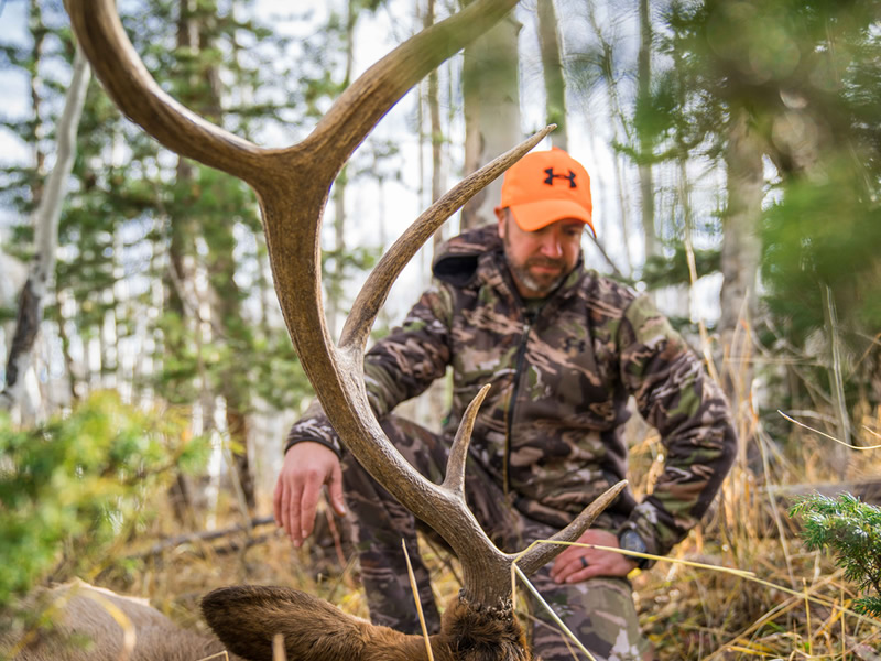 Premier Elk Outfitters, Wyoming Elk Hunts