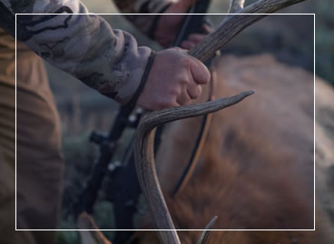 About Premier Elk Outfitters